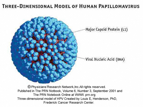 latent period hpv,percentage of americans with hpv,hiv latent period,hpv incubation period,hpv latency period,
